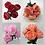 Thumbnail: Peony Flowers Bush X 5
