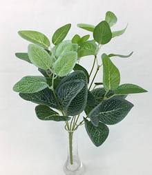 Green Eucalyptus Leaf Bush