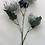 Thumbnail: 67 cm Pincushion Protea