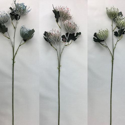 67 cm Pincushion Protea