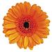 CAD_Logo_400x400.png