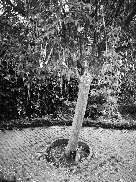 Alnwick Castle Poison Gardens: 3 of 5