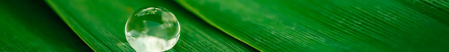 image_drop-on-banana-leaf
