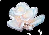 image_tremella(AdobeStock_185437954).png