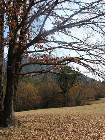 il bosco di Dravau