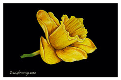 buttercup 6x9.jpg