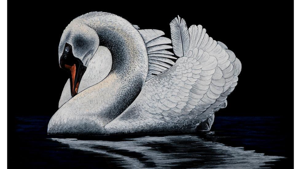 swan/black