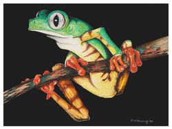 frog12x9.jpg