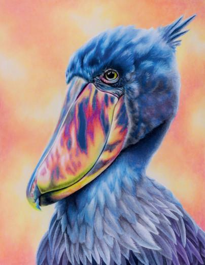 """Shoebill Stork"""
