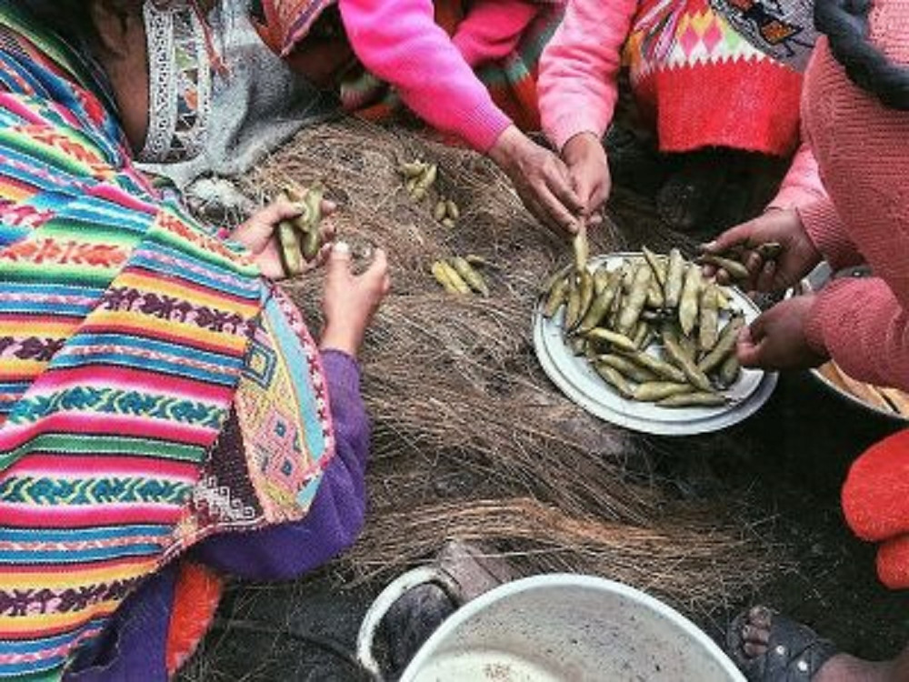 Preparing fava beans, a local Peruvian dish