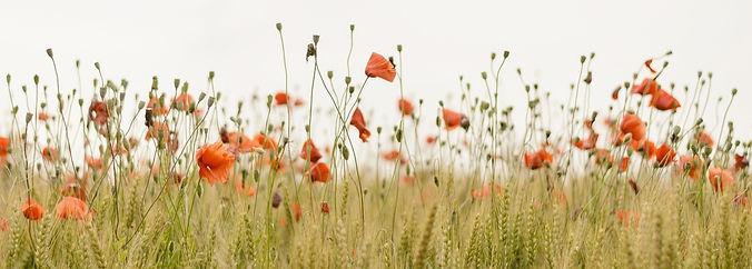 bloom-1836375_1920_edited_edited_edited.