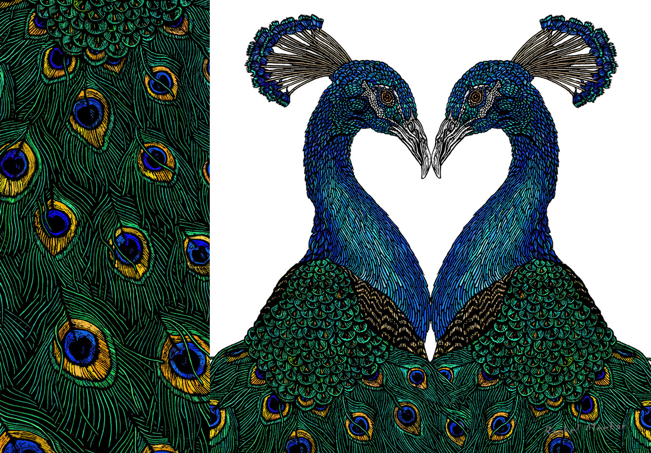 Peacock Lovers