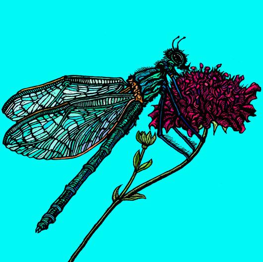 Dragonfly and Knautia Macedonia