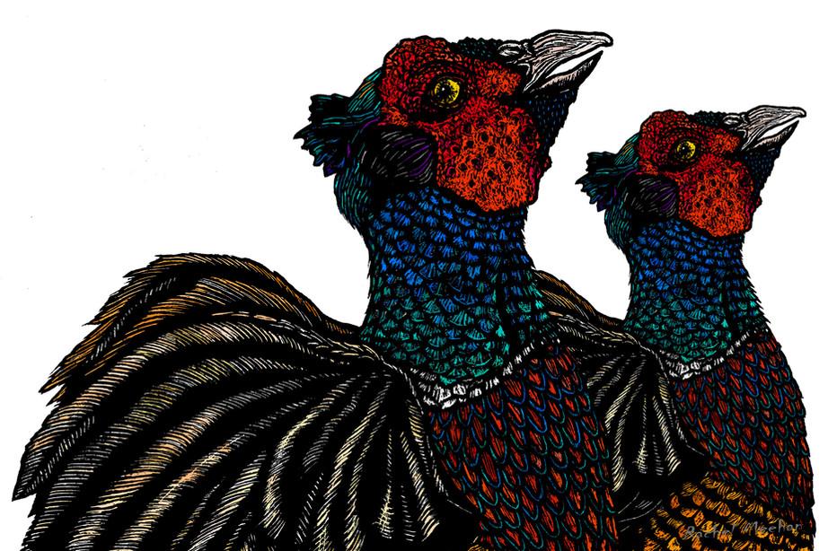 Common Pheasant Duo