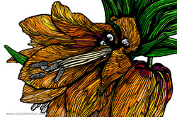 Fritillaria Imperialis by R Meehan