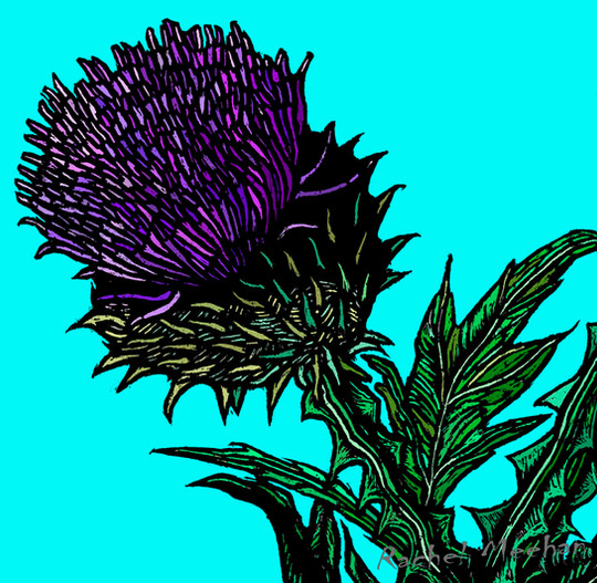 Jaggy Thistle