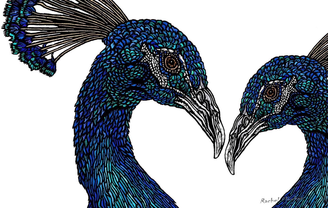 Peacock - Lovers Portraits