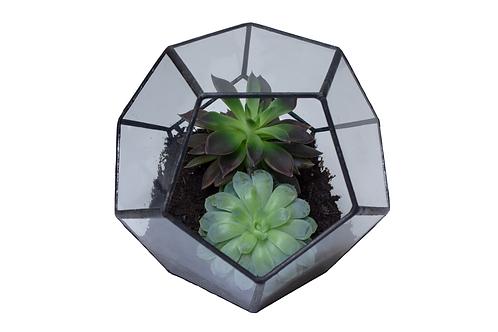 Love is Love Collection  - Glass Geometric Succulent Plant Terrarium