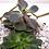 Thumbnail: Love is Love Collection  - Glass Geometric Succulent Plant Terrarium