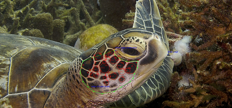 turt fingerprint.png