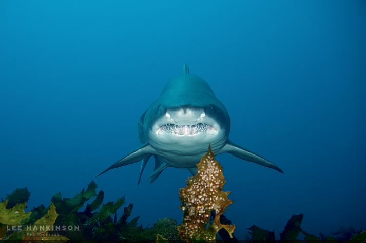 Sharky smile