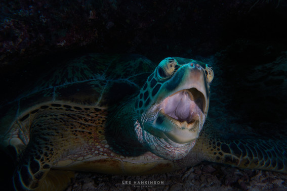 Do turtles dream of jellyfish?