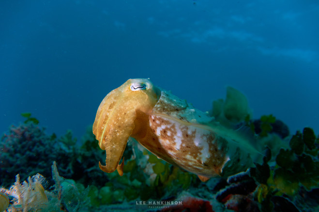 Alien under the sea