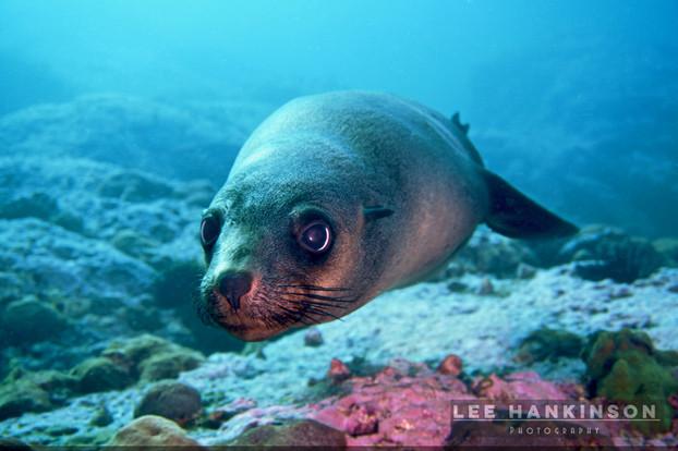Fur seal fun