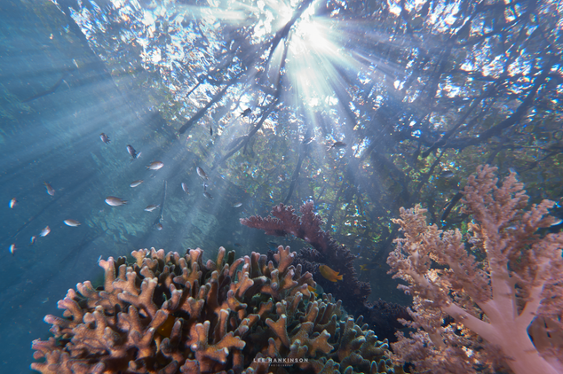 Where corals meet the forest