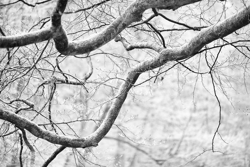 Les u Metují