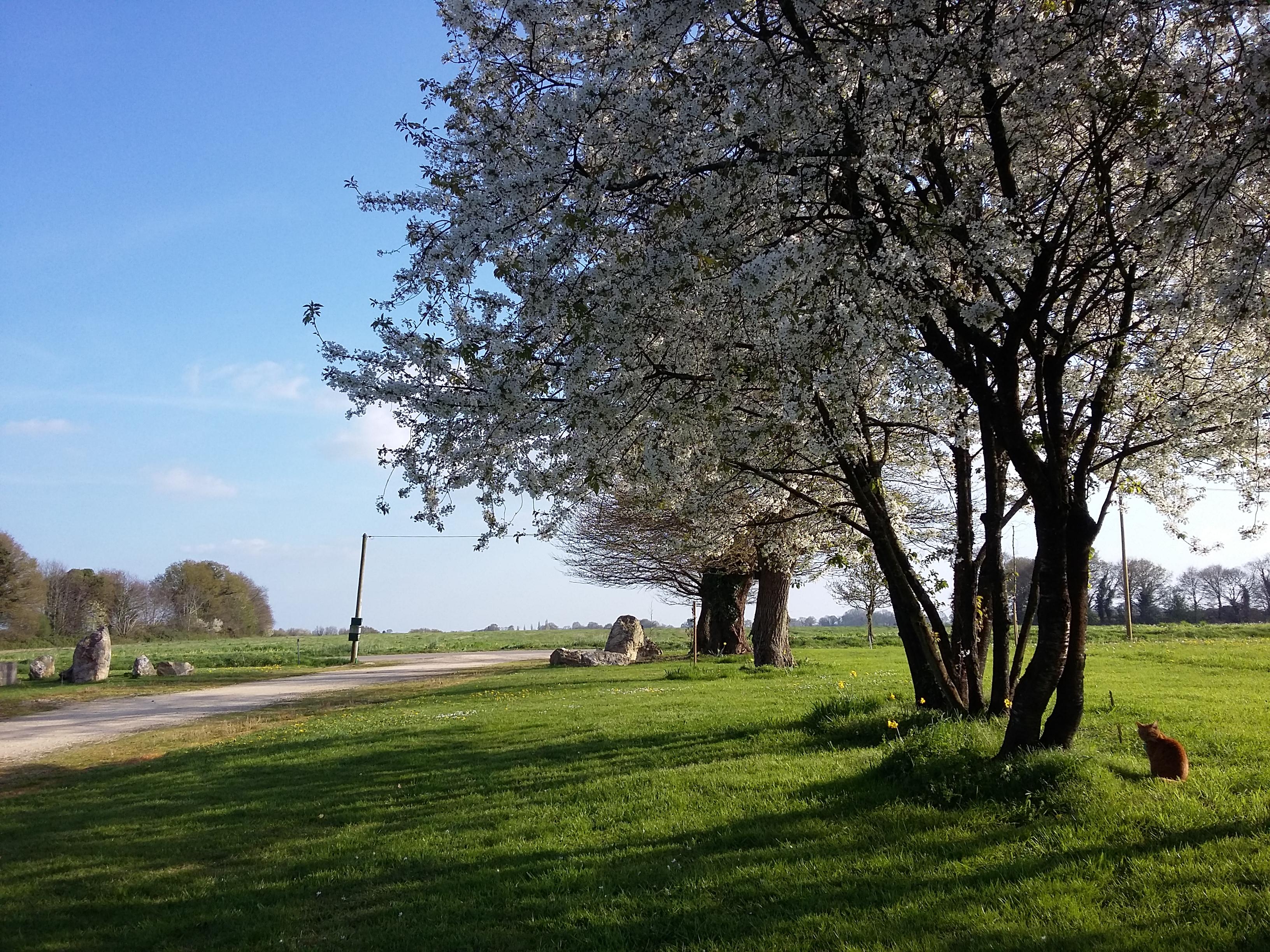 La Vieille Ferme cerisiers
