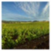 Brittan Vineyards image .jpg