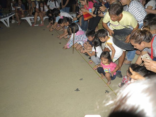 Marine turtles released at All hands beach