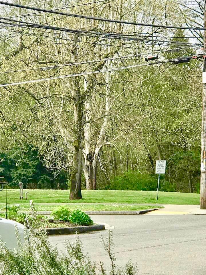 Lichton Springs Park