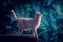 Ben jij opzoek naar bijzondere fotografen die bijzondere portretfoto's van jouw huisdier kunnen maken? Nikki is één van deze bijzondere fotografen en richt zich op portretfotografie van mens en dier. Hier zie je een witte kat die op een lederen bok staat voor een jungle setting. Door de speciale belichting krijgt de foto iets pakkends en aparts. Een creatieve foto van een kat.
