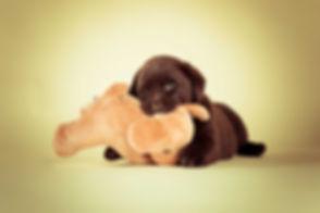 Wil jij een fotoshoot boeken van jouw puppy? Nikki is een hondenfotograaf en is één van de bekendste (dieren) fotografen van Nederland. Voor professionele portretfoto's van jouw huisdier ga je naar haar fotostudio in Alphen aan den Rijn.