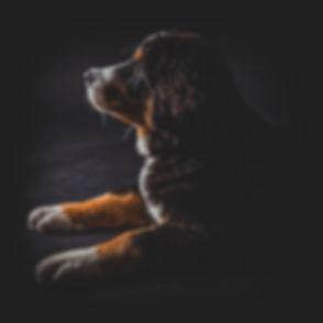 Mooie portretfoto van jouw hond laten maken? Dierenfotograaf Nikki Hoff helpt jou hier graag mee. Portrait of a dog. Professional animal photography.