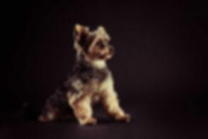 Op zoek naar een hondenfotograaf in Zuid Holland? Studio86 staat bekend om haar prachtige dierenportretten. Nikki is namelijk een professionele dierenfotograaf en helpt jou graag bij een mooie portretfoto maken van een jouw hond.