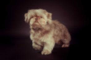 Nikki is een bekende Nederlandse fotograaf die o.a. ook hondenfotografie doet. Wil jij een mooie foto van jouw hond laten maken? Ik ben een goede fotografe die jou graag helpt jouw hond te fotograferen in de fotostudio, Studio86 in Zuid Holland.