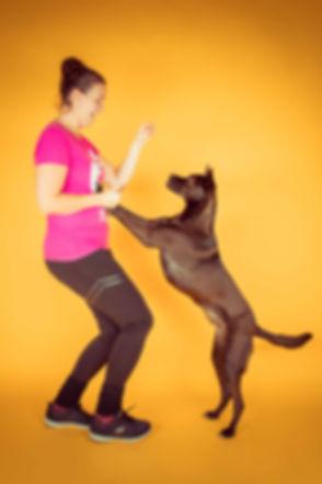 Wil jij de prijs van een fotoshoot met hond weten? Neem dan een kijkje op www.studio86.nl/prijzen. Op deze foto zie jij een hond die tegen zijn baasje aanspringt. Gemaakt op een gele achtergrond, wat tot een vrolijke foto leidt. Photoshoot dog with boss.