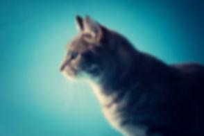Ontzettende mooie foto van een kat gemaakt in de fotostudio in Zuid Holland. Deze fotoshoot met kat kan ook op zondag worden ingepland. Voor professionele dierenfotografie ga je naar Studio86. This cat photoshoot can also be planned on a sunday.