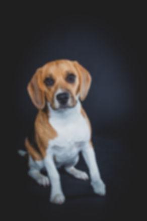 Niet alle honden vinden het leuk om gefotografeerd te worden. Maar wil je dan toch een mooie portretfoto laten maken van jouw hond? Dan kan je het beste naar dierenfotograaf Nikki Hoff gaan. For dog photography you can go to Nikki, who is specialised in animal photography.