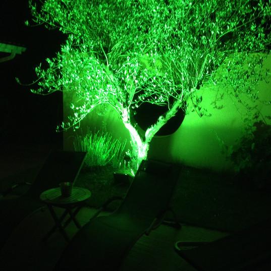 Eclairage olivier à Montauban