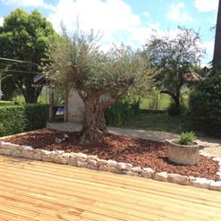 Eclairage olivier à Caussade