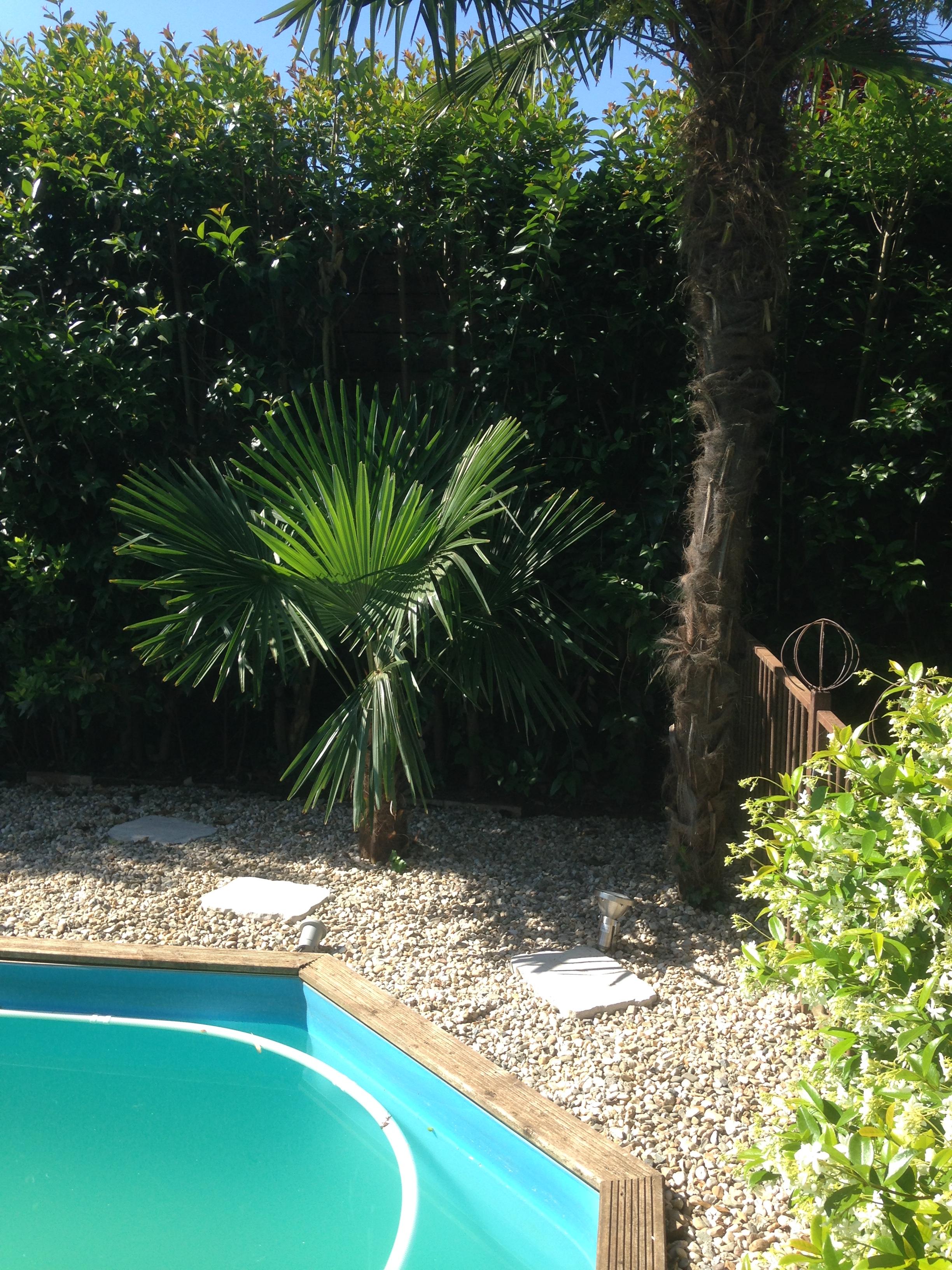 Eclairage palmier et piscine