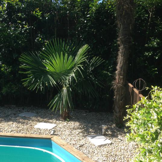 Eclairage palmier piscine à Caussade
