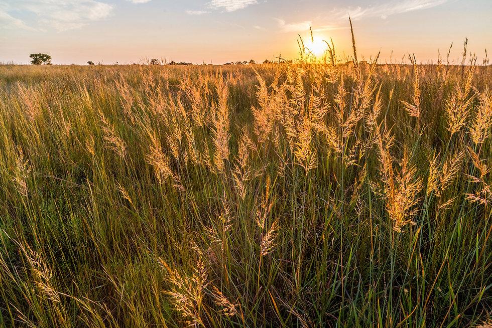 Tall-Grass-Prairie-at-Sunset.jpg