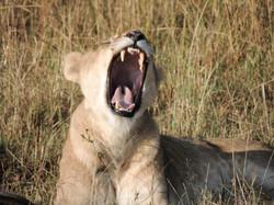 Morning Yawn