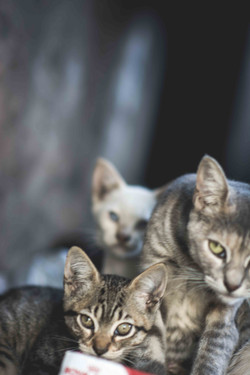 Feral Cat Family on L.A. River