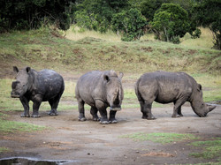 Rhino poses